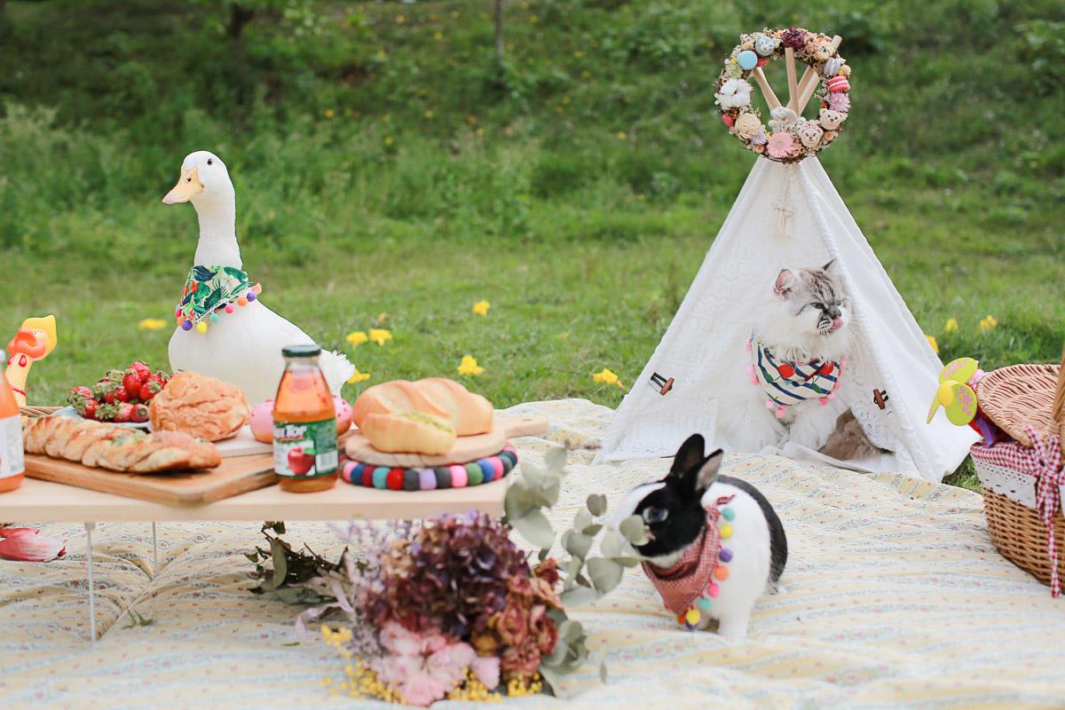 鴨鴨,鴨子,兔子,布丁,寵物,寫真,毛孩,攝影,狗狗,喵星人,汪星人,寵物攝影價格,台北,台中,寵物寫真,黃金獵犬寫真,柴犬,米克斯,狐狸犬,毛孩婚,沙龍,戶外寫真,婚紗