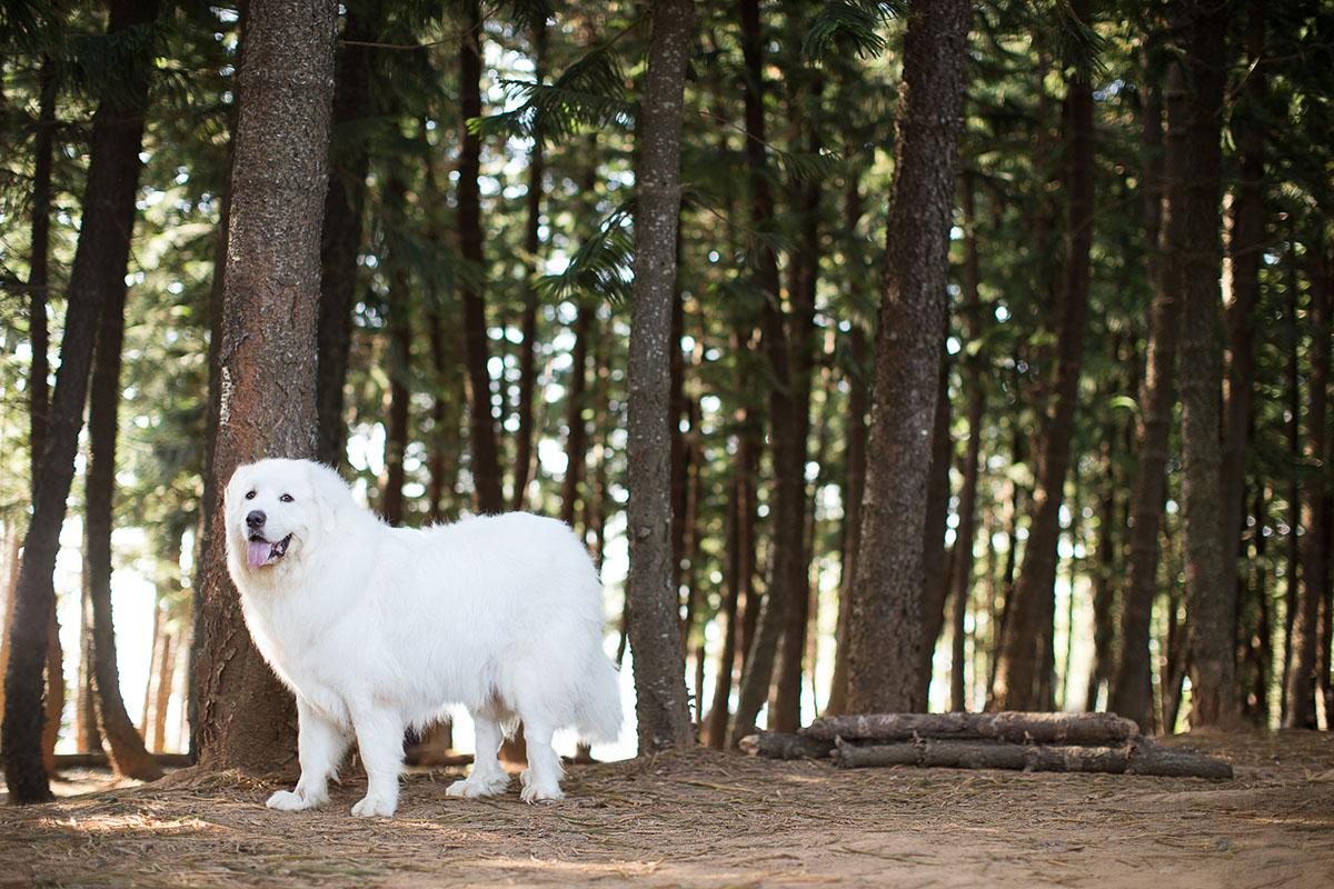 《寵物寫真》溫柔的巨人 / 大白熊